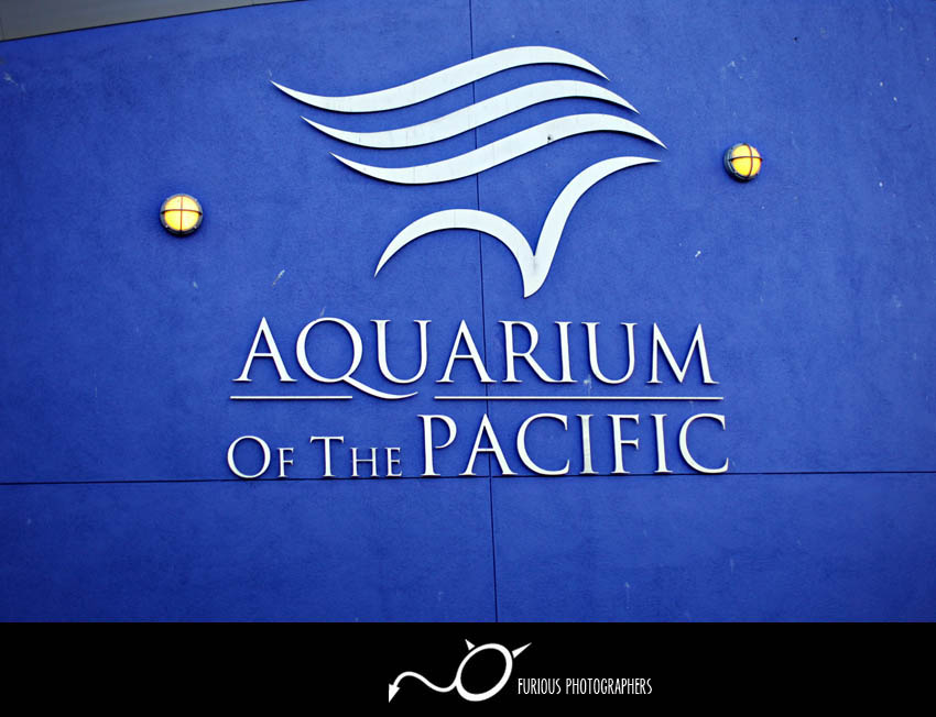 aquarium of the pacific long beach wedding photography